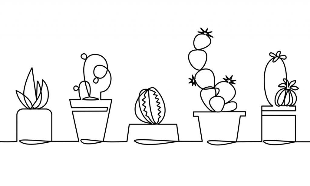 観葉植物 初心者