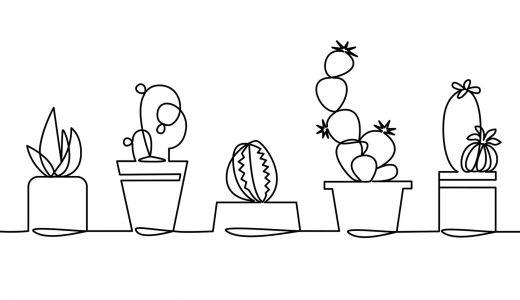 初心者におすすめの観葉植物!知っておきたい知識や育て方
