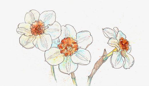 冬の花といえば、どんな花が思い浮かぶ?寒い時期に彩りを