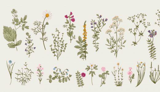 切ない花言葉の花まとめ。けなげで哀しい、そんな花を紹介