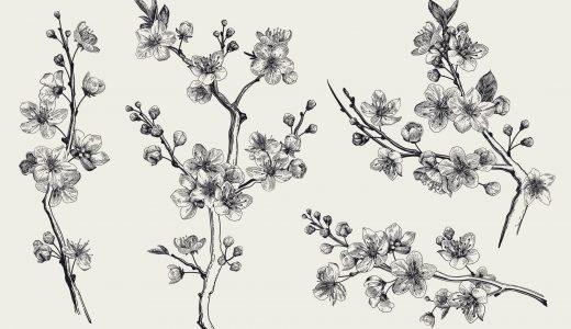 桜の花言葉とは?意味や由来、種類別にわかりやすく紹介