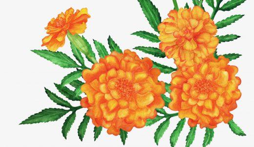 花言葉が友情の花を厳選紹介!春夏秋冬でまとめてみました