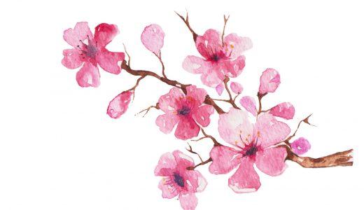 桜を詠んだ和歌ベスト10!時代を超えて詠みつがれる魅力