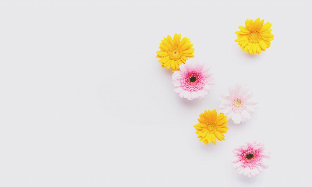 お見舞いの花