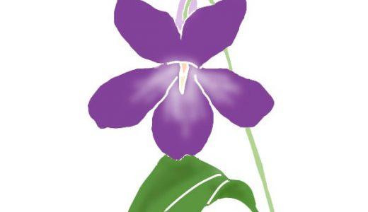 季節ごとで楽しめる!おすすめしたい「紫の花」特集