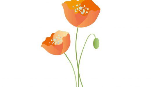 ヒナゲシの花言葉は?開花時期や由来もわかりやすく紹介