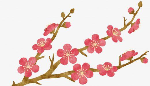 春を感じる!梅の種類や豆知識、見頃などをかんたん紹介