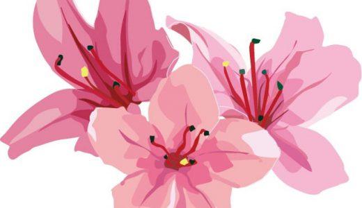 春の季節に見たい!ツツジの特徴や花言葉、開花時期を紹介