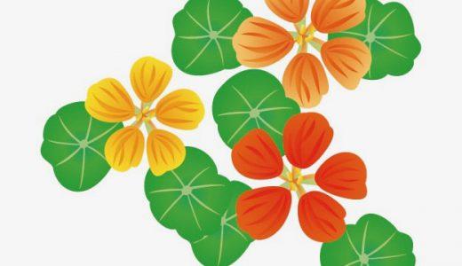 ナスタチウム(金蓮花)の特徴や花言葉、歴史をかんたん紹介