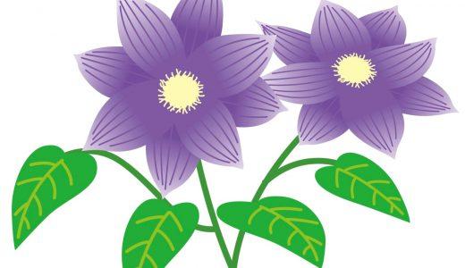 クレマチスとは?花の特徴や花言葉、開花時期などを紹介