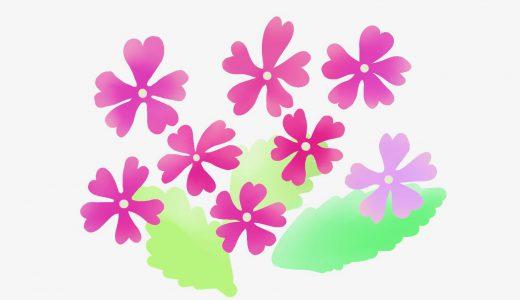 サクラソウの歴史や特徴、開花時期、花言葉をまとめて紹介