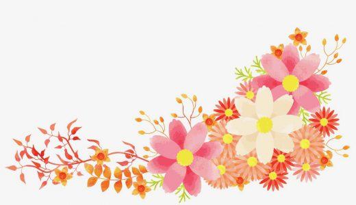 アスターとはどんな花?特徴や花言葉、種類もかんたん紹介
