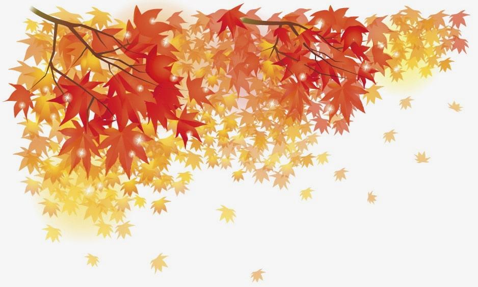 秋 楽しみ方