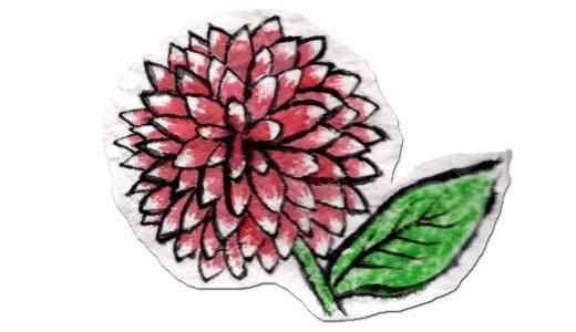 ダリアの季節や花言葉、育て方、開花時期などを簡単紹介