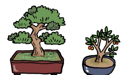 盆栽とは?世界を魅了する盆栽の素晴らしさを徹底解説