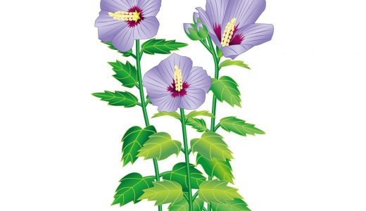 花を堪能することも韓国旅行の魅力!?季節ごとに韓国の花を紹介